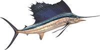 fish 5.ai