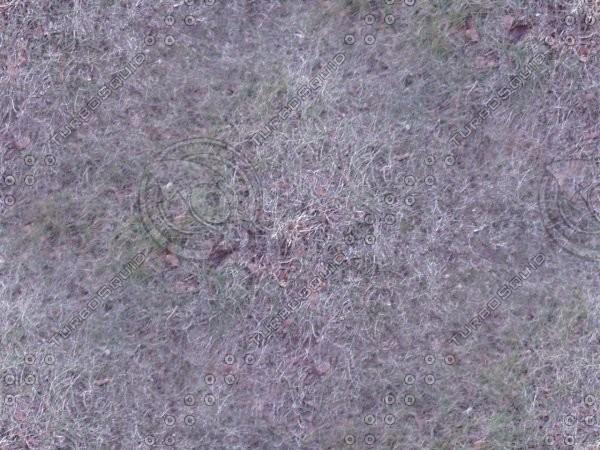 free_grass.JPG