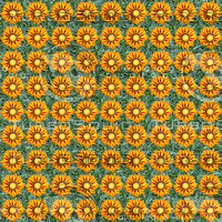 Gazania flowers seamless pattern