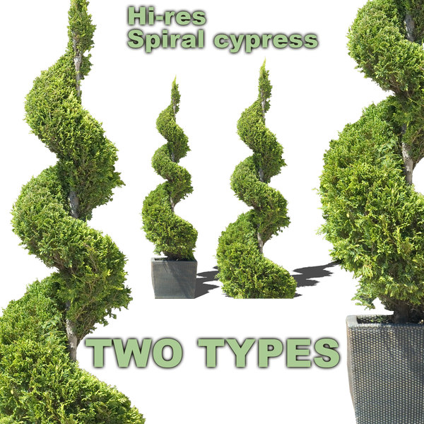 spiral_sypress_all.jpg
