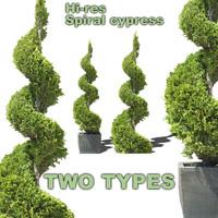 Spiral cypress