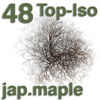 Top Views - japanese maple