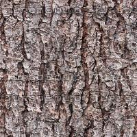 tree bark 5.jpg