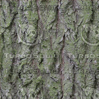 tree bark green D4.jpg