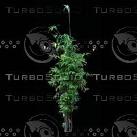 tree-02-02.zip