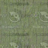 tree bark green 5.jpg