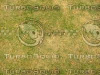 Lawn  20090119 101