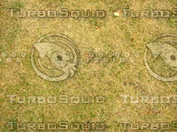 Lawn  20090119 106