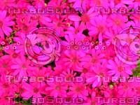 Flower 20090328 084