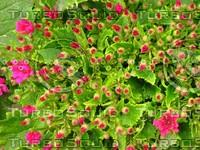Flower 20090328 088