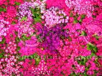Flower 20090328 096