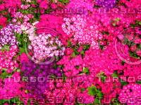 Flower 20090328 098
