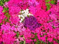 Flower 20090328 101