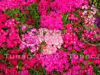 Flower 20090328 102