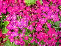 Flower 20090405 001