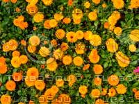 Flower 20090405 002