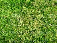 lawn  20090405 013