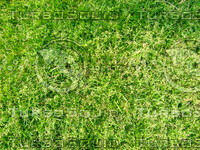 Lawn  20090405 019