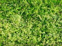 Lawn  20090405 022