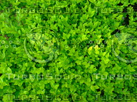 Green  Plant 20090409 023