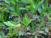 Green Plant 20090409 055