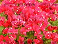 Flower 20090423 079