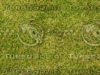 Lawn 20090530 003