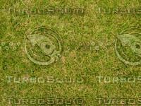 Lawn 20090530 007