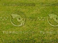 Lawn 20090530 019