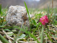 little stone and red flower