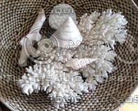 Coral-Shells.jpg