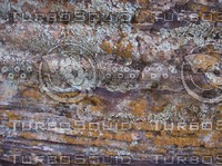 Desert Texture 4.jpg
