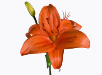 Orange 01 Flowers Photo Pack Drux