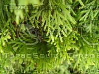 Plant Closeup.JPG