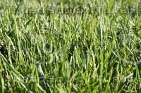 SPX_Grass001