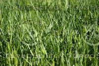 SPX_Grass002