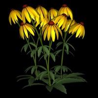 TX Flower Group 020