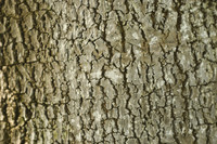 Tree Bark Texture Picture Pack