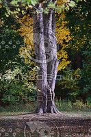 Tree Standing.jpg
