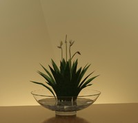 WaterLilyBowl w Plant