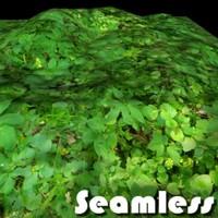 Forest Grass Texture 4
