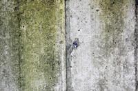 cement grunge texture