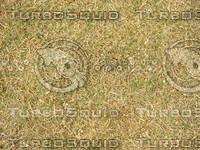 Lawn Carpet cz3 138
