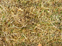 Lawn Carpet cz3 144