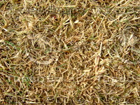 Lawn Carpet cz3 148