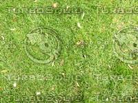 Lawn  cz4 066