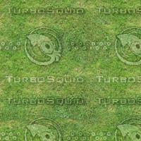 Grass_5000x5000