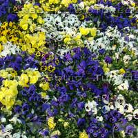 flowers (3 textures)