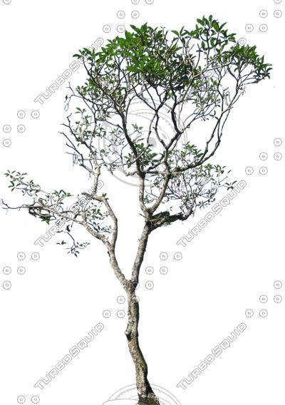 kamboja-tall-400px.jpg