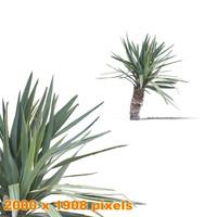 Palm bush